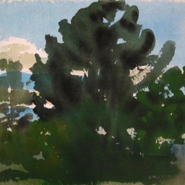 Dark Trees 4, watercolor on paper, 12 by 12 in. Emilia Kallock 2006