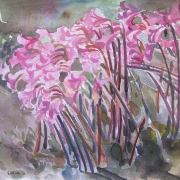 Nerene Lilies 1, watercolor on paper, 8 by 8 in, Emilia Kallock 2011