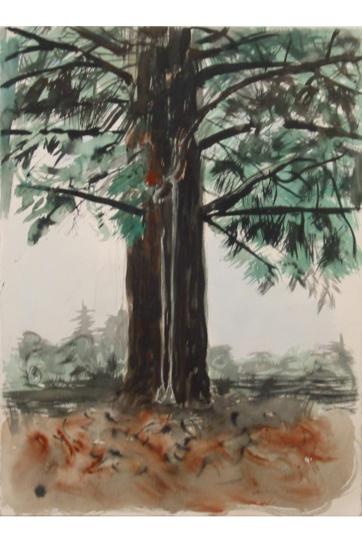Swing in Redwood Tree, watercolor on paper, 32 by 16 in. Emilia Kallock 2002