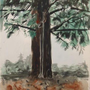 Swing in Redwood Tree, watercolor on paper, 32 by 16 in. Emilia Kallock 2002