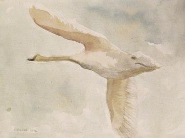 Swan 1, watercolor on hemp paper, 6 by 9 in. Emilia Kallock 2016