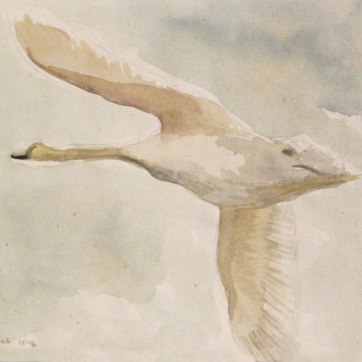 Swan 1, watercolor on hemp paper, 6 by 9 in. Emilia Kallock 2016