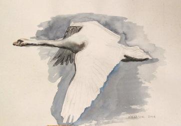Swan 2, watercolor on hemp paper, 6 by 8 in. Emilia Kallock 2016