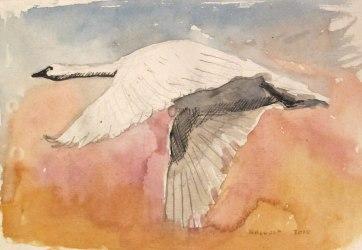 Swan 3, watercolor on hemp paper, 6 by 8 in. Emilia Kallock 2016
