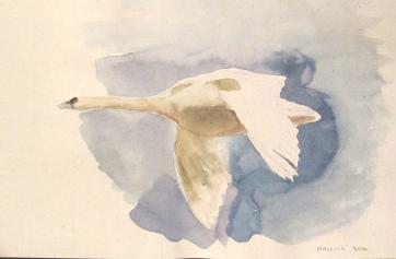 Swan 4, watercolor on hemp paper, 6 by 9 in. Emilia Kallock 2016