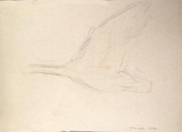 Swan 5, watercolor on hemp paper, 6 by 8 in. Emilia Kallock 2016