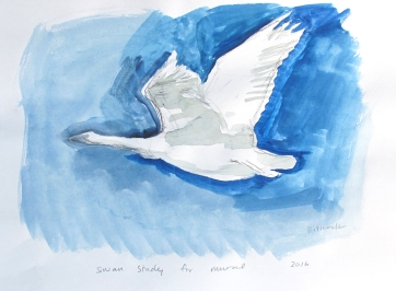 Swan 19, watercolor on paper, 8 by 10 in. Emilia Kallock 2016