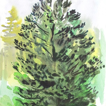 Study of Dark Pine, watercolor on paper, 8 by 6 in. Emilia Kallock 2016