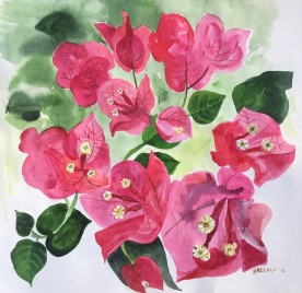 Study of Bougainvillea, Chile, watercolor on paper, 11 by 11 in. Emilia Kallock 2016