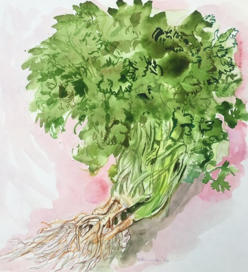 Cilantro in Chile, watercolor on paper, 11 by 11 in. Emilia Kallock 2016