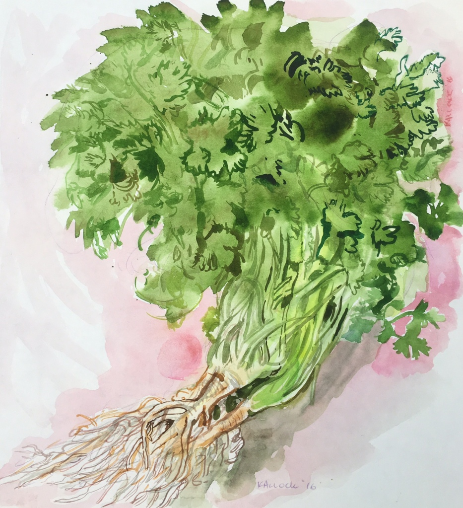 Cilantro, watercolor on paper, 11 by 11 in. Emilia Kallock 2016