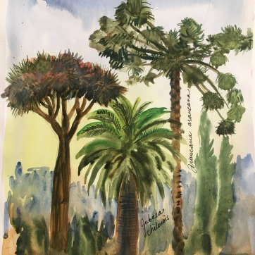 Some Trees I Saw in Chile, watercolor on paper, 11 by 9 in. Emilia Kallock 2017