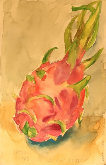 Dragonfruit, Vietnam, watercolor on paper, 8 by 8 in. Emilia Kallock 2018