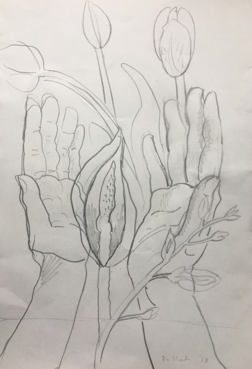 Tulip, Hands 1, pencil on paper, 10 by 8 in. Emilia Kallock 2018 $500