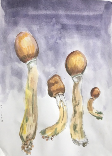 Psilocybe Cubensis, or Magic Mushrooms, or Fear Means to Pass Through, watercolor on paper, 11 by 8 in. Emilia Kallock, 2018