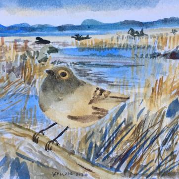 Kinglet,, Skagit River Estuary, watercolor on paper, 4 by 5 in. Emilia Kallock, 2020